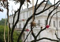 Makové slavnosti na zámku Ploskovice
