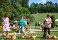 Klubová výstava plemen Australská kelpie, Welsh corgi cardigan a Welsh corgi pembroke 2019 v parku zámku Valtice