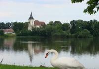 Výlov rybníka Bošilecký
