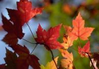Podzimní výlovy u Strakonic