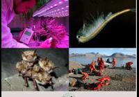 Věda očima botaniků a zoologů