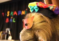 Maškarní bál s písničkovými Tetinami 2020 v Zoo Brno