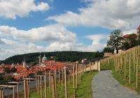 Svatováclavská vinice, Praha 1