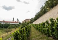 Svatojánská vinice