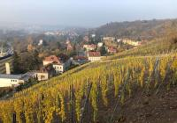Zilvarovy vinice