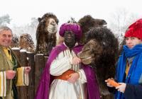 Tři králové v Zoo Praha