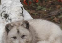 Zimní šampionát zvířat - Zoo Brno