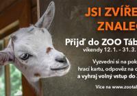 Soutěž v Zoo Tábor