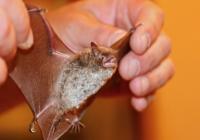 Mezinárodní noc pro netopýry - Zámek Kozel