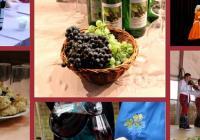 Hlohovecké vinobraní