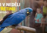 Děti každou neděli za 50 Kč - Zoo Praha