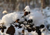 Pohádkový les - Vlašim