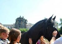 Slavnosti koní historie a řemesel v Kuksu