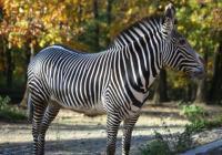 Ty jsi můj přírodní výběr - Zoo Brno