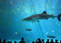 Virtuální prohlídky Georgia Aquarium