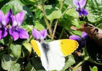 Motýlárium Votice, Votice