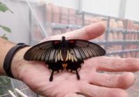 Motýlárium Olomouc