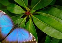 Tajemný život motýlů