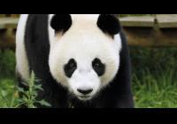 Virtuální prohlídky - Ouwehands Zoo