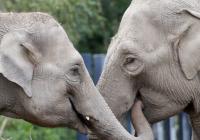 Virtuální prohlídky - Dublin Zoo