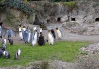 Virtuální prohlídky - Zoo Zürich