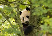 Virtuální prohlídky - Zoo Edinburgh