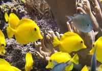 Virtuální prohlídky - National Aquarium
