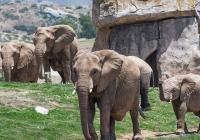 Virtuální prohlídky - San Diego Zoo Safari Park