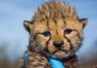 Virtuální prohlídky - Smithsonian's National Zoo and Conservation Biology Institute