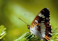 Letem světem motýlů