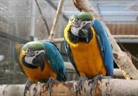 Prohlídka Papouščí zoo Bošovice 2020