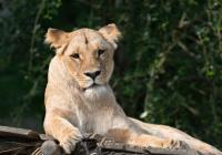 Prohlídka Zoo Zlín-Lešná 2020