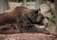Prohlídka Zooparku Chomutov 2020
