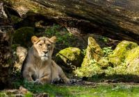 Prohlídky Zoo Ostrava 2020