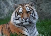 Prohlídky Zoo Hluboká nad Vltavou 2020