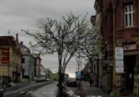 Skleněná plastika stromu, Nový Bor