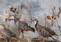 Ptáci – poslové jara