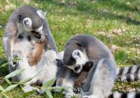 Virtuální prohlídky Zoo Ústí nad Labem