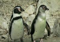 Virtuální prohlídky Zoo Zlín Lešná