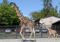 Prohlídka Zoo Olomouc 2020