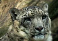 Prohlídka Zoo Liberec 2020