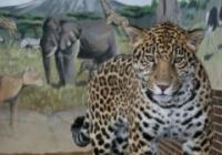 Prohlídka Zoo Hodonín 2020