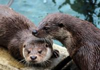 Prohlídka Para Zoo Vlašim 2020
