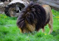 Prohlídka Zoo Na Hrádečku 2020