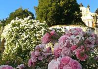 Prohlídky s rozkvetlými růžemi