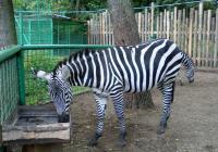 Prohlídka Zooparku Berousek 2020