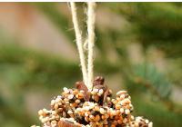 Tvoření pro děti: Semínkoví krmítko ze šišky