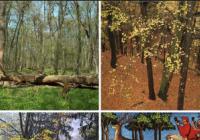 Co se nese v lese