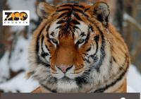 Den tygrů
