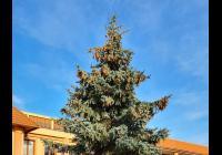 Rozsvícení vánočního stromu online - Sezemice